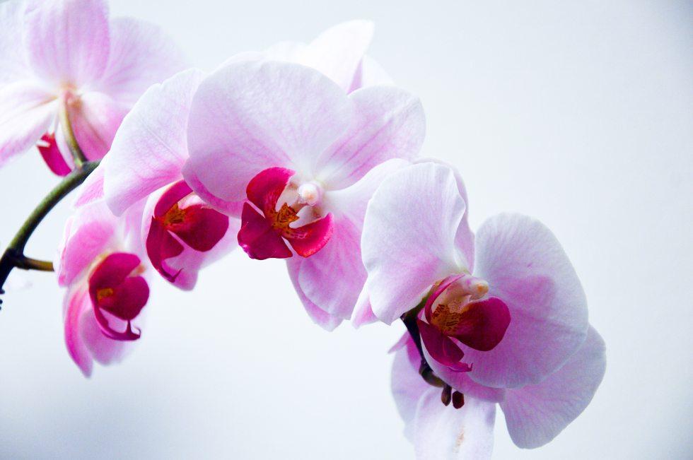 bloom-flora-floral-8204
