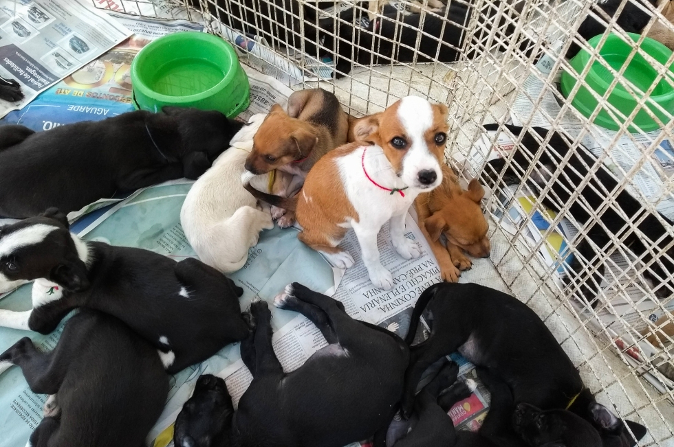 Feira adoção de cães e gatos